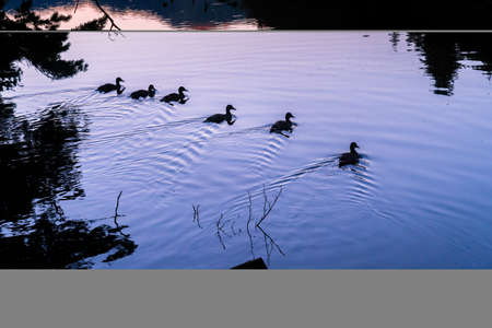 Silhouette of some ducks at a beautiful sunrise or sunset on an alpine lake. Concept of vacations, summer, relaxation and disconnection in nature. Wilderness.