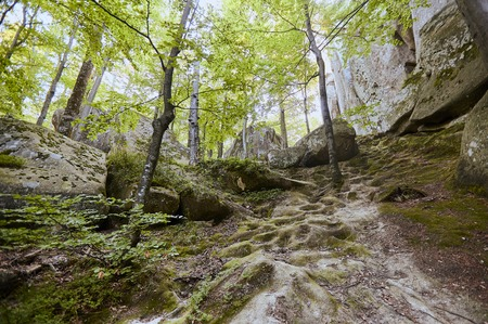 Forest landscape - fairytale beech forest