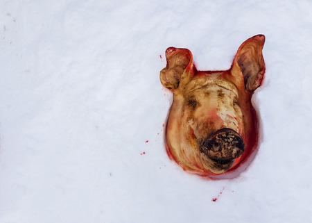 cut off pig's head lying on the snow