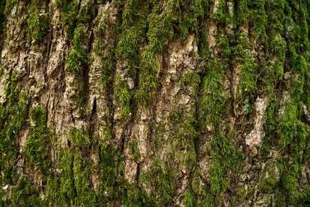 bark covered with moss on the trunk of a tree close up