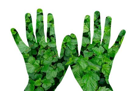 green vegetation on hands on white background.