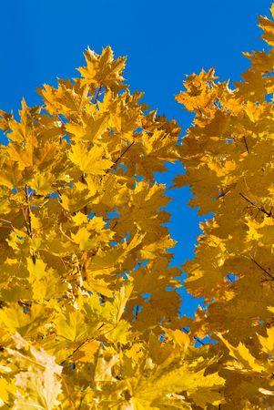 Multi-coloured autumn leaves on trees