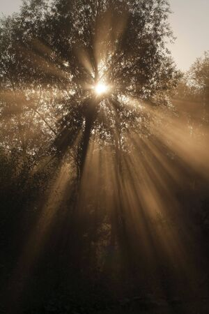 The solar beam shines through tree foliage Stock Photo - 4716534