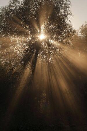 The solar beam shines through tree foliage Stock Photo - 4716534