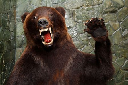 The brown bear during attack waves a paw Stock Photo