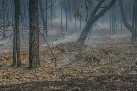 Smoke and fire in the forest after a forest fire.