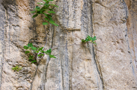 Plant growing in the crevice of stone Imagens