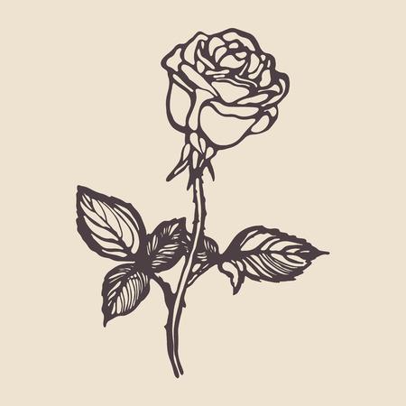 Vintage hand drawn rose. Vector illustration.