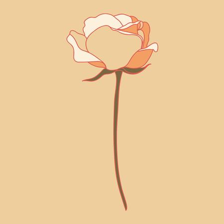 Rosa. Un fiore. Illustrazione vettoriale.