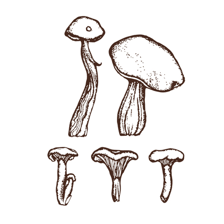 Collection of forest wild mushrooms. Boletus, chanterelles. Set. Hand drawn.