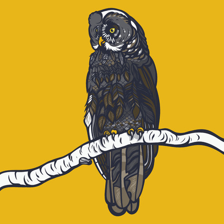 Strix nebulosa. Owl sitting on a branch of a birch. Realistic illustration. Vector. 矢量图像