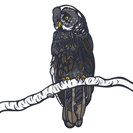 Strix nebulosa. Owl sitting on a branch of a birch. Realistic illustration. Vector. Illustration