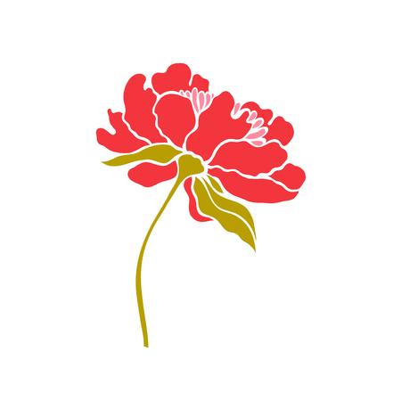 Paeonia. Peony. Vector illustration.