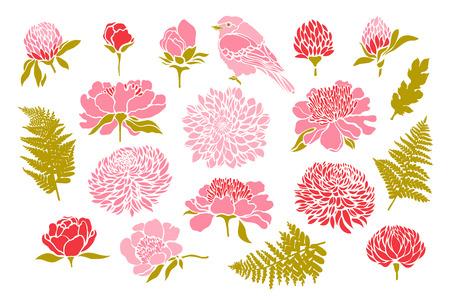 Set with birds and flowers. Peony, chrysanthemum, clover, tulip, fern. Vector illustration. Ilustrace