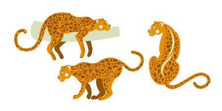 Tropical fauna of mammals. Set of wild leopards. Vector illustration. 矢量图像