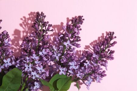 Purple lilac flowers bouquet on pink backround. Stylish floral greeting card. Happy mothers day.