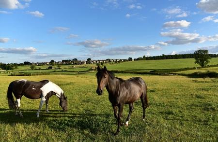 wiltshire: English horses in Wiltshire, UK Stock Photo