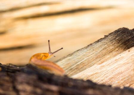 Orange slug crawling on wood