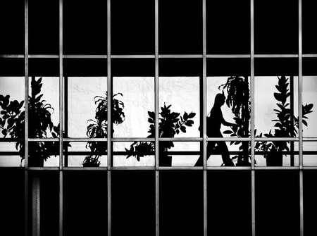 urban jungle: Jungla urbana