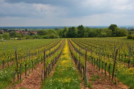 des vins: Travel wine route in France. La route des vins.