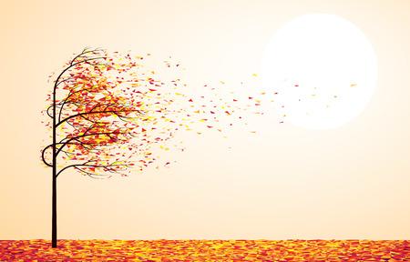 Autumn tree.