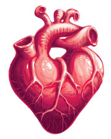 animal vein: Red heart shape with veins. Eps8. CMYK. Gradients and mesh free.