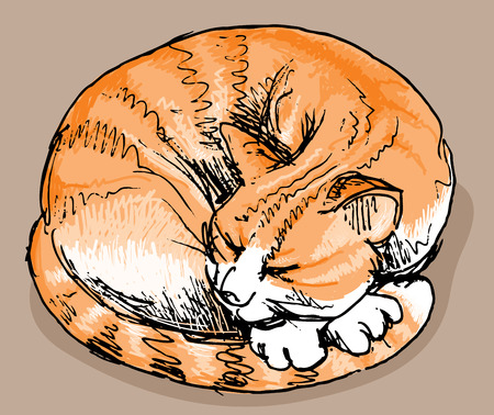 Hand drawn sleeping red cat. Eps8. CMYK. Organized by layers. Easy recolor. Two global colors.