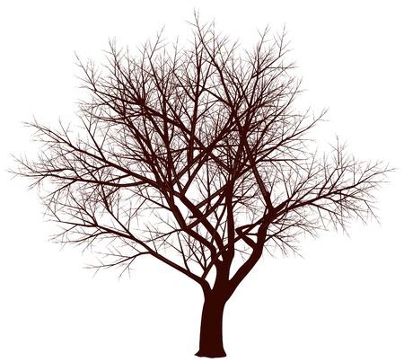 tall tree: Tree in fall. Eps8. CMYK. Gradients free Illustration