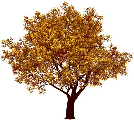Tree in fall. Eps8. CMYK. Gradients free Illustration