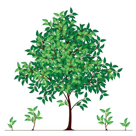 broadleaved tree: Tree in florescence. Eps8. CMYK. Global colors. Gradients used