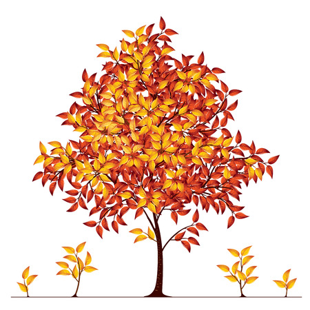 broadleaved tree: Autumn tree. Eps8. CMYK. Global colors. Gradients used