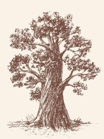 broadleaved tree: Tree drawn with brown chalk. CMYK. Gradients free. Illustration