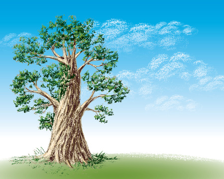 broadleaved tree: Green field and lonely tree. Eps8. CMYK. Organized by layers. Global colors. Gradients used.