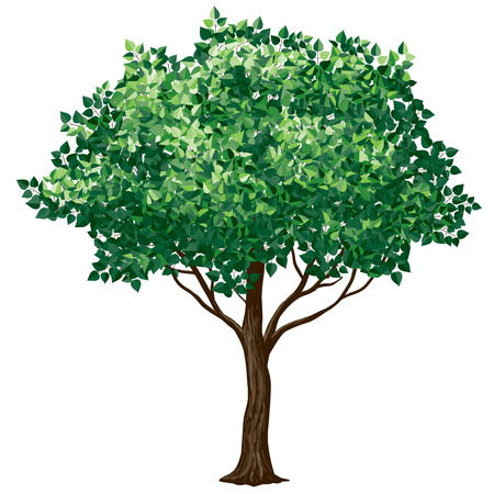 broadleaved tree: Tree in florescence isolated on white.CMYK. Organized by layers. 4 global colors. Gradients free. Illustration