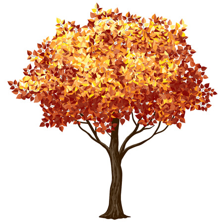 Tree in fall isolated on white. CMYK. Organized by layers. Global colors. Gradients free. 向量圖像