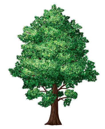 broadleaved tree: Tree in florescence isolated on white. Eps8. CMYK. Organized by layers. 4 global colors. Gradients free.