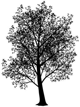 Vector ilhouette of tree. Black an white. Eps8. Illustration