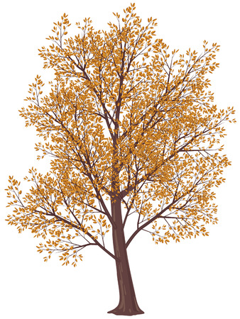 free fall: Tree in fall. Gradients free. Eps8. CMYK Illustration