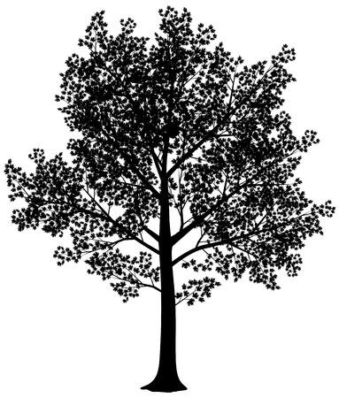 벡터 검은 색과 흰색 단풍 나무 실루엣. 벡터 일러스트 레이 션. 케이