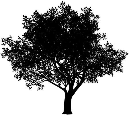 벡터 검은 색과 흰색 나무 실루엣. 파란색입니다. 무료 그라디언트 스톡 콘텐츠 - 33178689