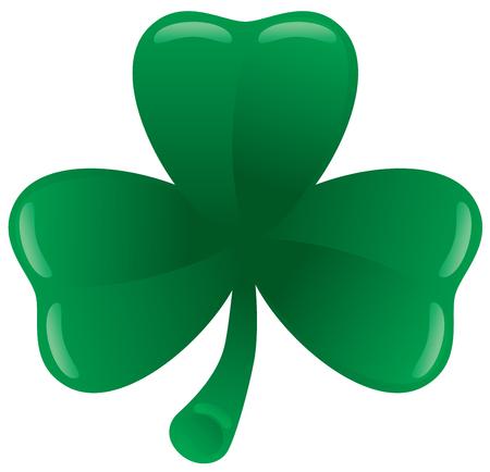 three leaf: Green three leaf clover on white.