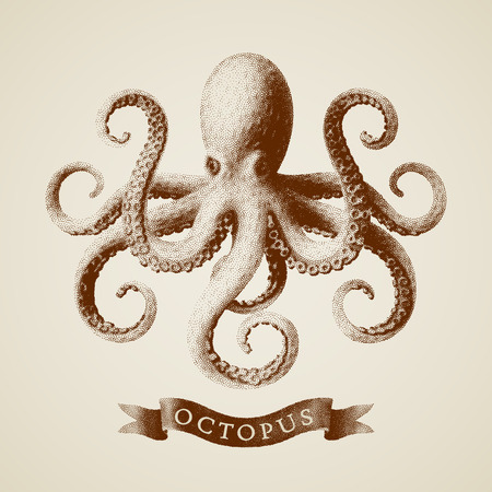 Vector octopus painted in engraving style