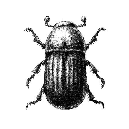 Schwarz-Weiß-Vektor abstrakte Käfer handgezeichnet im Stil der Vintage Radierungen