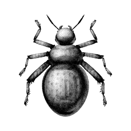 maxillary: Black and white vector abstract beetle hand-drawn in the style of vintage etchings