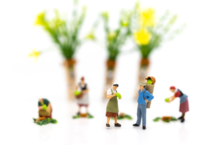 Miniature people: Gardeners and the results of agriculture, vegetables. Image use for distribution to the market.