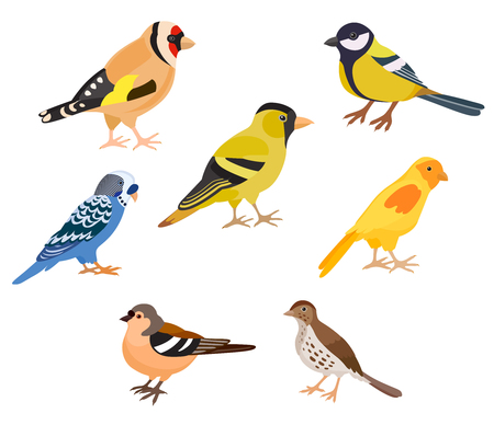 A set of colorful birds, isolated vector illustration. Goldfinch, thrush, canary, siskin, tit, finch, budgie decorate cards or other design