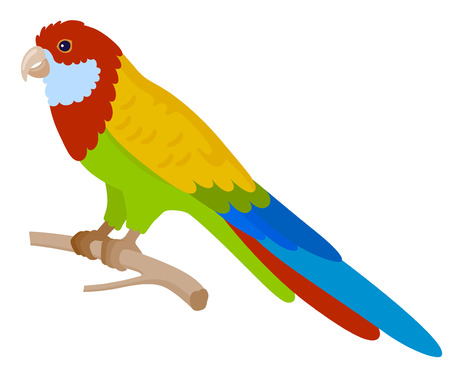 zoological: Colorful parrot, isolated vector illustration.  Perfect cards or any other kind of design