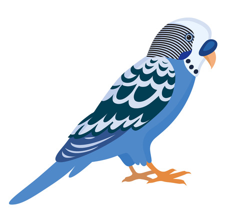 Blue budgerigar with colorful feathers, isolated vector illustration. Perfect cards or any other kind of design