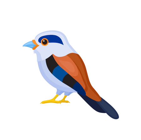 Bird with colorful feathers, isolated vector illustration.  Perfect cards or any other kind of design