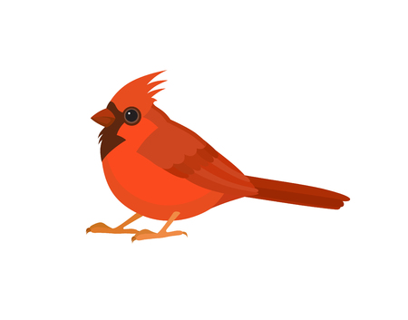 Bird with red feathers, isolated vector illustration.  Perfect cards or any other kind of design